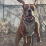 buster-the-boxer-feature-image